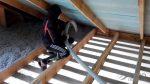 Каким утеплителем утеплить потолок в бане – Утеплитель для бани на потолок: чем лучше утпелить керамзитом или полиспеном, утепление изнутрии, опилки снаружи