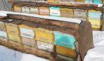 Как утеплить на зиму ульи – Утепление ульев на зиму пенопластом – Способы и советы, как правильно утеплить улей пчёлам для зимовки на улице