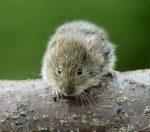Керамзит и мыши – Живут ли мыши в керамзите — Ремонт квартир